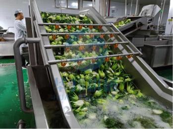 中央厨房净菜加工彩友彩票平台 气泡蔬菜清洗机