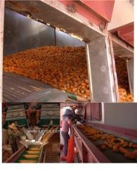 玉米种子烘干机