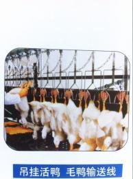 家禽屠宰设备 鸡鸭宰杀流水线
