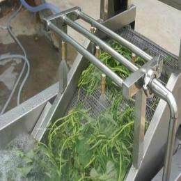菠菜 小白菜翻浪式清洗机 气泡清洗机