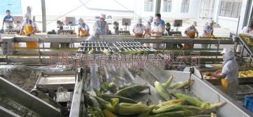 甜玉米加工设备特点