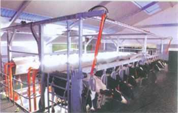 平行双列前胸栏提升快出式挤奶系统