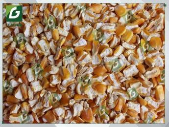 6FT-PD1衢州市 饲料厂专用玉米脱皮机