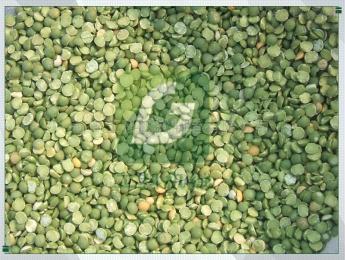 6FT-PB8豌豆豆類脫皮機