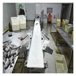 GCFX-300重量分拣机自动称重设备鱼分级机