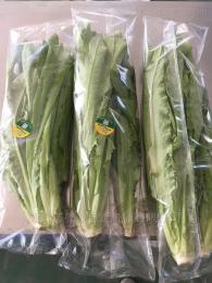 Medlon6800全自动蔬菜包装机