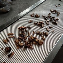QTJ-4型供应香菇切片机 菌菇类切条机