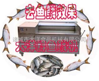 YQT淡水鱼刮鳞机,活鱼去鳞机直销