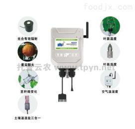 植物生理及环境监测系统