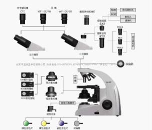UPH103i吉林相差顯微鏡型號,國產相差顯微鏡zui低價格,UPH103I系列相襯顯微鏡