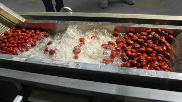 永新红枣鼓泡式清洗设备 可 不锈钢大枣清洗机