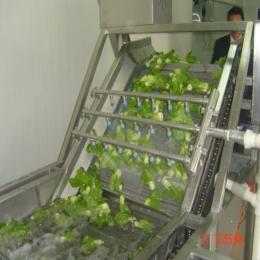 QXJ厂家直销叶菜清洗机
