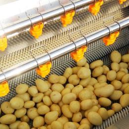 HY-1500土豆去皮清洗机/山药毛辊清洗机