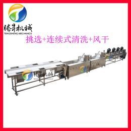 TS-X200蔬菜清洗机 果蔬分拣清洗风干流水线