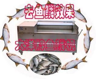 YQT多功能鲜鱼脱鳞机|刮鱼鳞机