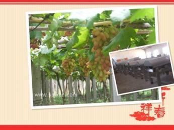 葡萄酒处理设备除梗破碎机新乡鑫华轻工现货销售中