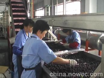 树莓加工设备
