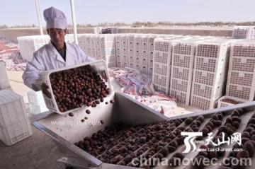 枸杞、红枣浓缩汁设备