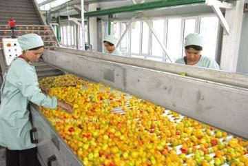 杏酱加工设备