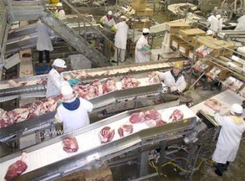 食品輸送機-食品輸送線