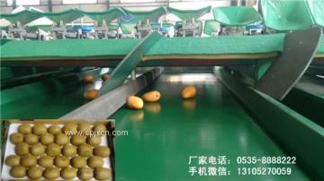 台湾柠檬分选机材料