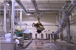 和義HY供應屠宰流水線牦牛換軌 牛屠宰流水線 牛屠宰設備