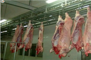 猪屠宰流水线 白条手推线 白条自动线 屠宰机械