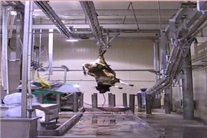 和義HY供應屠宰流水線牦牛換軌 牛屠宰加工設備