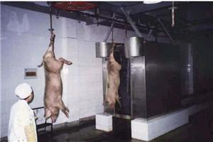和义HY专业生产销售各种屠宰设备 立式洗猪机