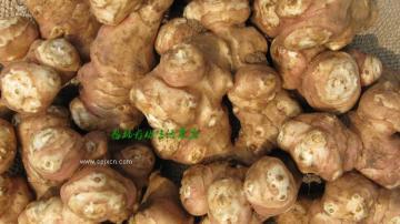 供应菊芋粉加工设备生产线