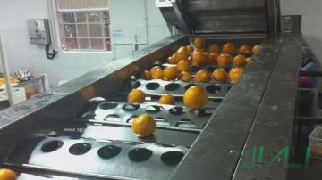 圆果滚筒分级机/橙子柠檬分选机/筛选机