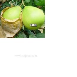 新苗hj-1双排机械手黄金梨草莓猕猴桃柠檬果袋机