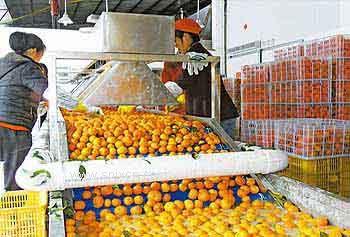 柑橘脐橙水果保鲜库-大量订购优质冷库