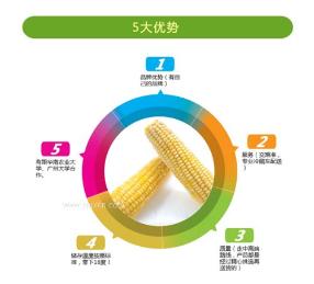 速冻玉米成套加工设备