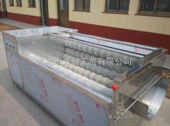 CY-800型厂家供应土豆芋头清洗去皮机毛辊清洗机价格