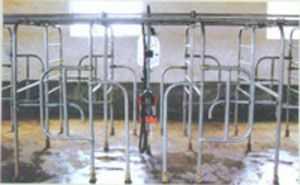直列式挤奶系统