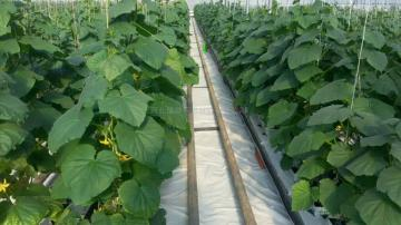 文昌市新技术农业岩棉块培育蔬菜瓜果岩棉板