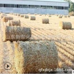 xm50*80小麥秸稈撿拾打捆機稻草行走式捆草機