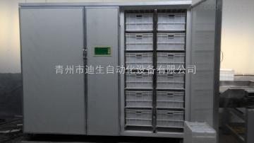 DS-800新型節能環保豆芽機