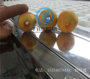 48型小型杏去核機
