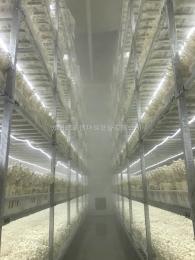 杏鲍菇种植大雾量加湿机器