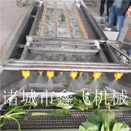 叶菜清洗机厂家