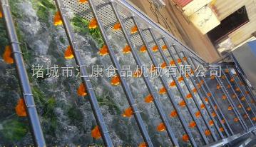 QX-5臭氧消毒清洗机,芹菜清洗机,雪菜清洗机,橄榄菜清洗机
