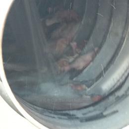 TQX-3米包装袋清洗机   塑料袋清洗机  毛刷式滚筒清洗机