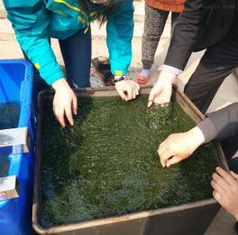GZ-200型魚豆腐去氣泡灌裝設備 魚豆腐供料機  魚丸供料機