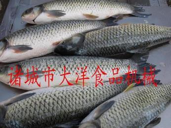 毛刷式脱鱼鳞机|淡水鱼去鳞机|自动脱鳞机