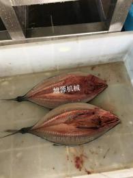 开背开肚杀鱼供应鲅鱼杀鱼开背机