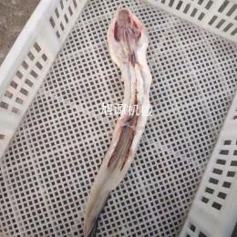 鳗鱼开背开肚供应鳗鱼开片机