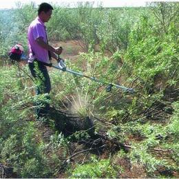 割草机家用小型割草机资讯豆类 收割干净