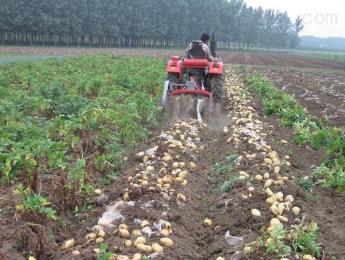 xy-75土豆收獲機